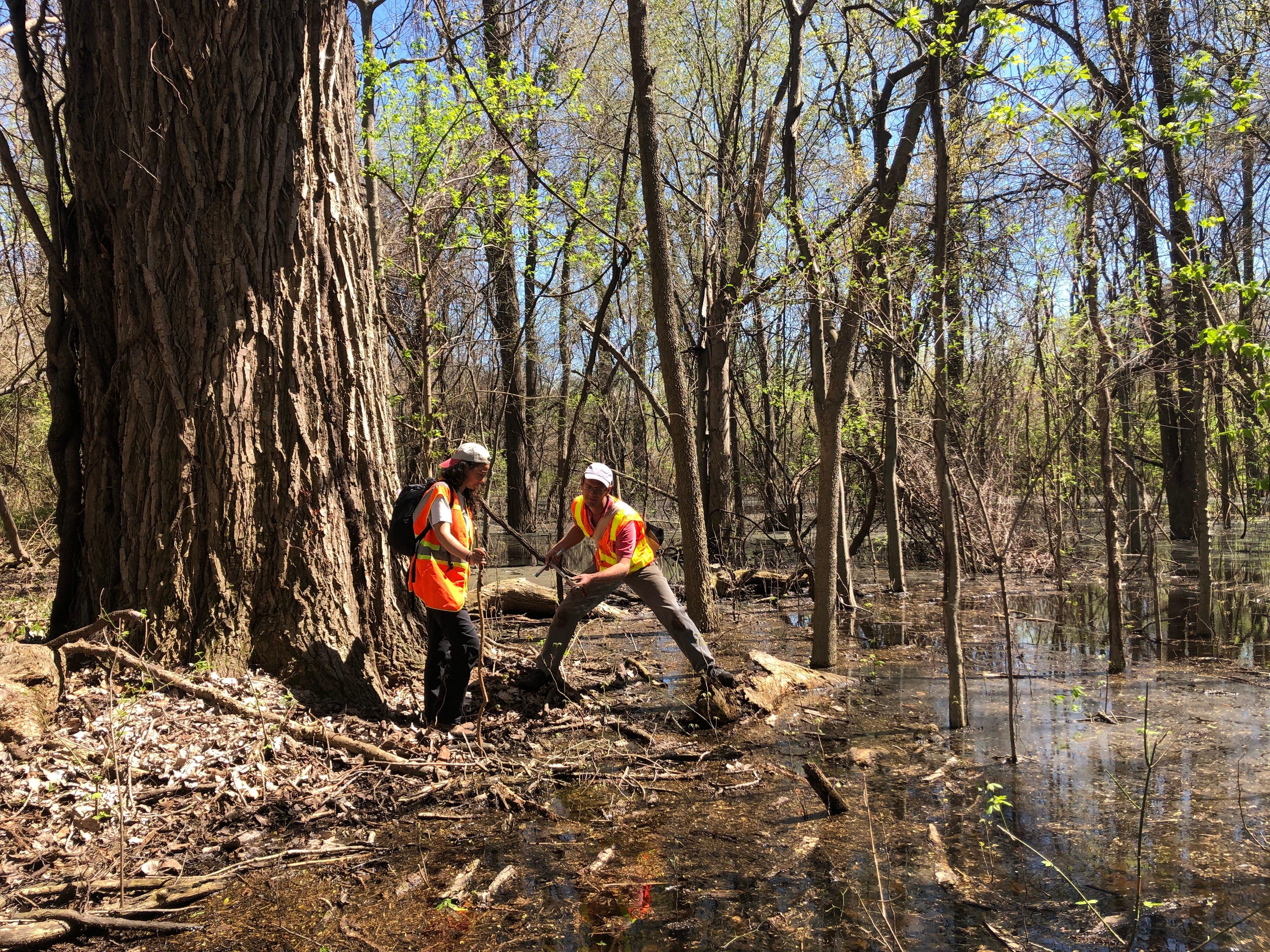 6 - Wetland Scientists at Work